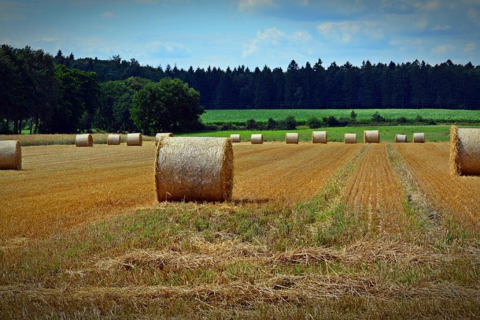 W województwie pomorskim działa 29 komisji ds. szacowania strat w rolnictwie