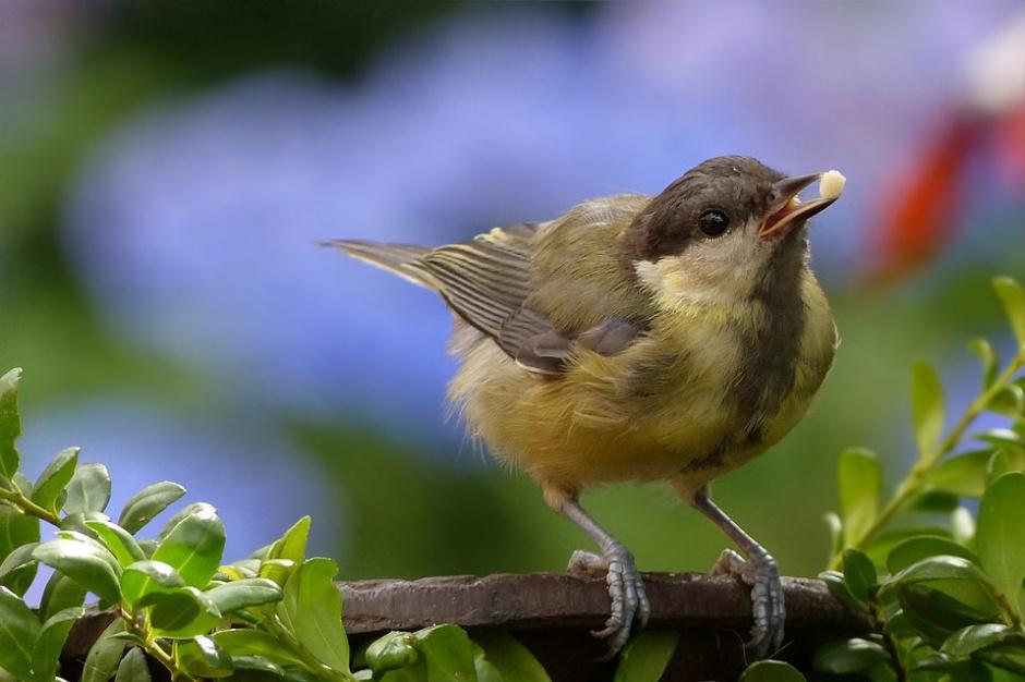 Stare gospodarstwa to oazy ptasiej bioróżnorodności