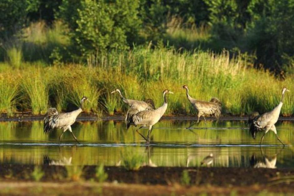 Unijne dofinansowanie rozwoju biznesu na obszarach Natura 2000 w województwie podlaskim