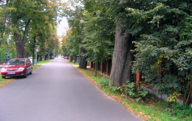 Konstancin-Jeziorna, wycinka drzew: Starostwo chce wyciąć 48 drzew. Mieszkańcy protestują