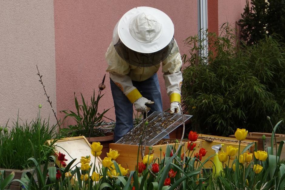 Podkarpackie: słaby sezon pszczelarzy