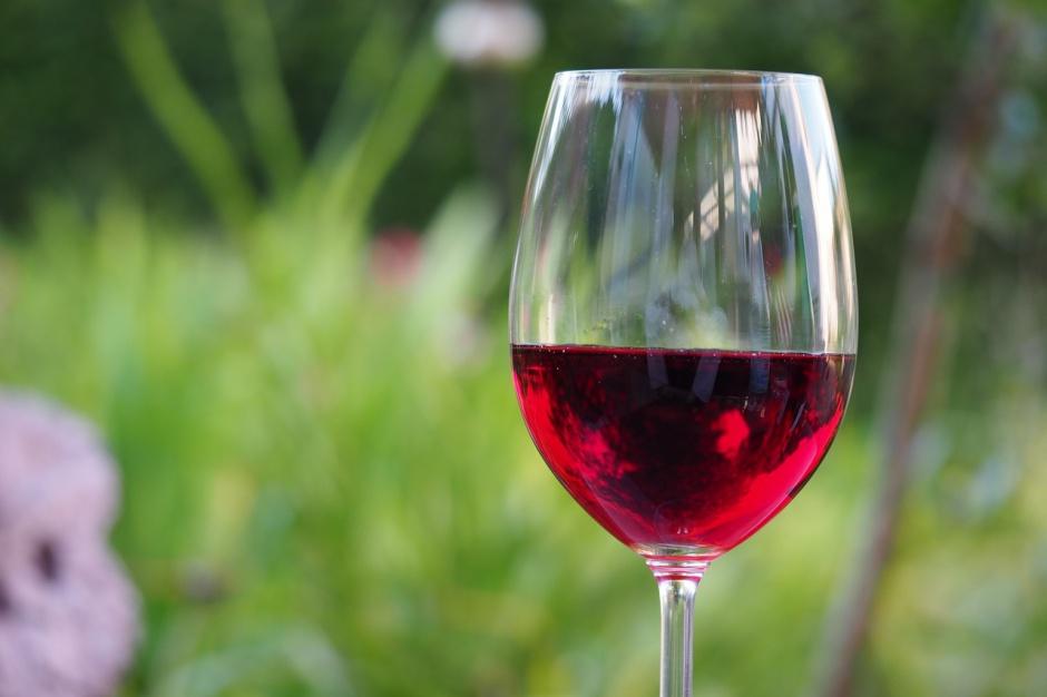 Winnice w Polsce: Przybywa lokalnych winnic, a samorządy chętnie je wspierają
