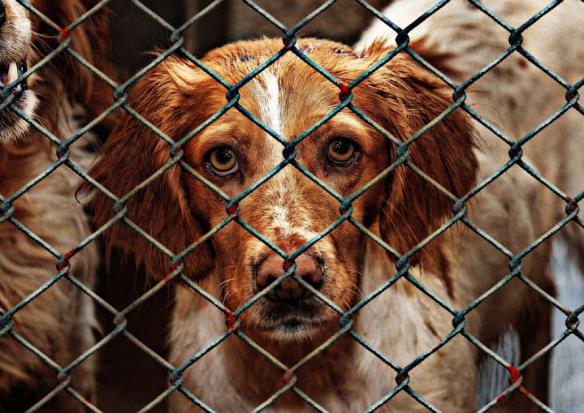 Gminy chcą rejestru właścicieli psów