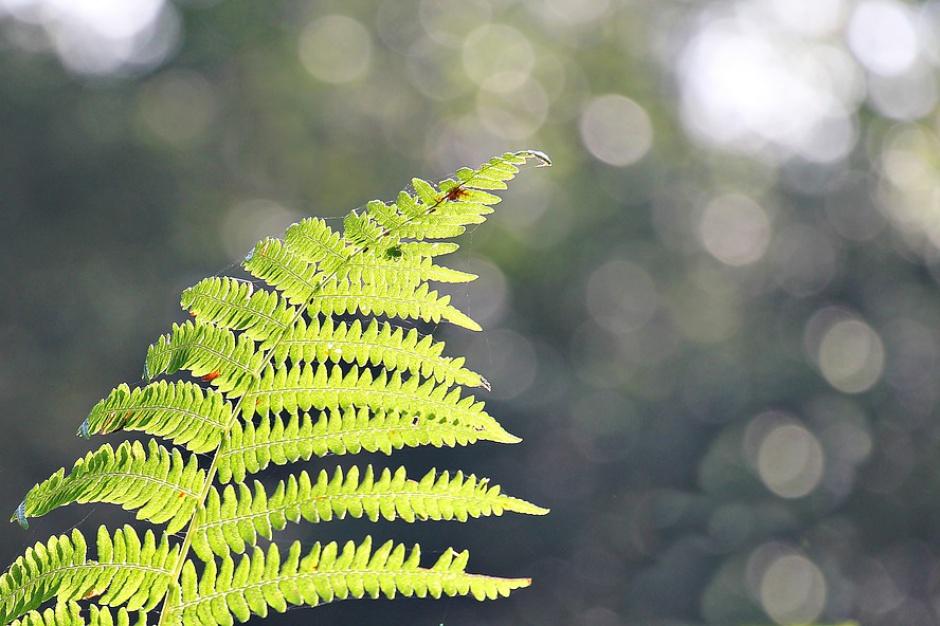 Niska emisja: Rośliny pomocne w walce z zanieczyszczeniami i smogiem