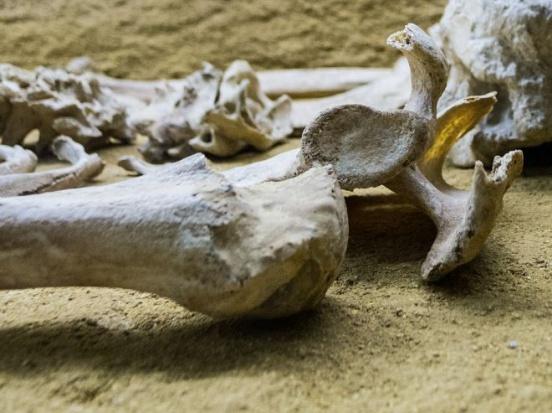Mińsk Mazowiecki: Archeologiczne odkrycie podczas przebudowy ronda