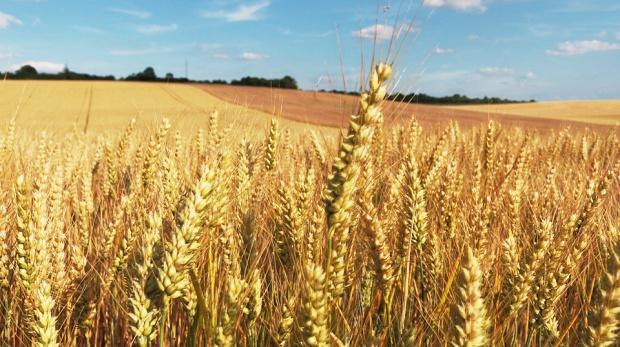 Podlaskie, scalanie gruntów: Cztery powiaty dostaną 62 mln zł z UE