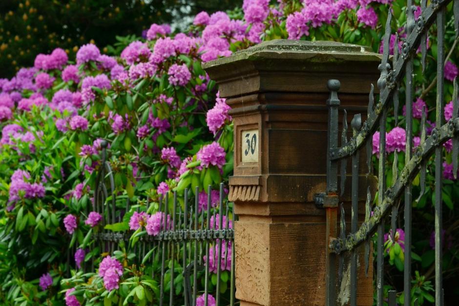Włochy: Burmistrz pracował społecznie w ogrodzie. Został ukarany