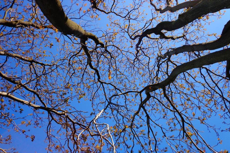 Rewaloryzacja centrum miasta w Kaliszu wzbudza emocje. Co z 70 drzewami?