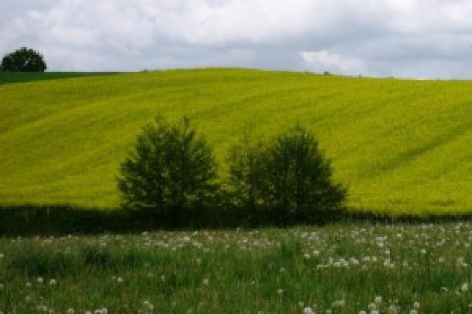 Olsztyn: 2 mln zł odszkodowania żąda Warmiaczka, była właścicielka siedliska