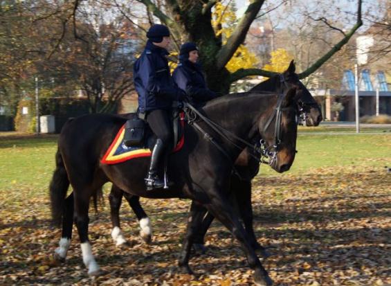 Policja, Warszawa:  konie na gminnym wikcie