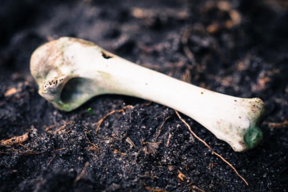 Budowa II linii metra: Na Woli odkryto szczątki ludzkie