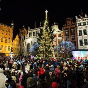 Największa choinka w Gdańsku liczy 25 metrów, ale nie jest jedyną w mieście. (fot. UM Gdańsk)