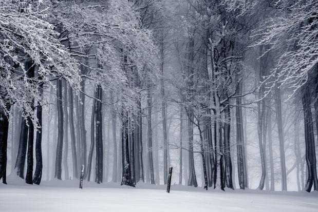 Szyszko: Lasy Państwowe stymulują rozwój wsi