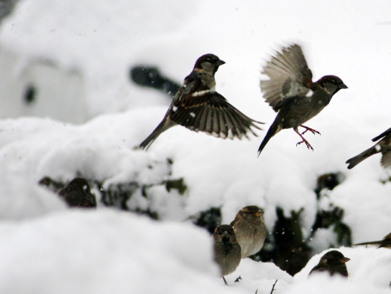 Dokarmianie zwierząt: Jak dokarmiać ptaki zimą?