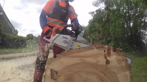 Wycinka drzew, nowe przepisy: Instrukcja krok po kroku