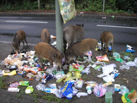 Dzikie zwierzęta w miastach: Jak z nimi żyć?