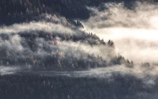 Smog: Rośliny pomagają w walce z zanieczyszczeniami powietrza