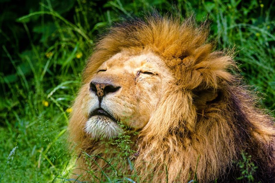 Warszawskie zoo zbiera prywatne pamiątki dotyczące ogrodu
