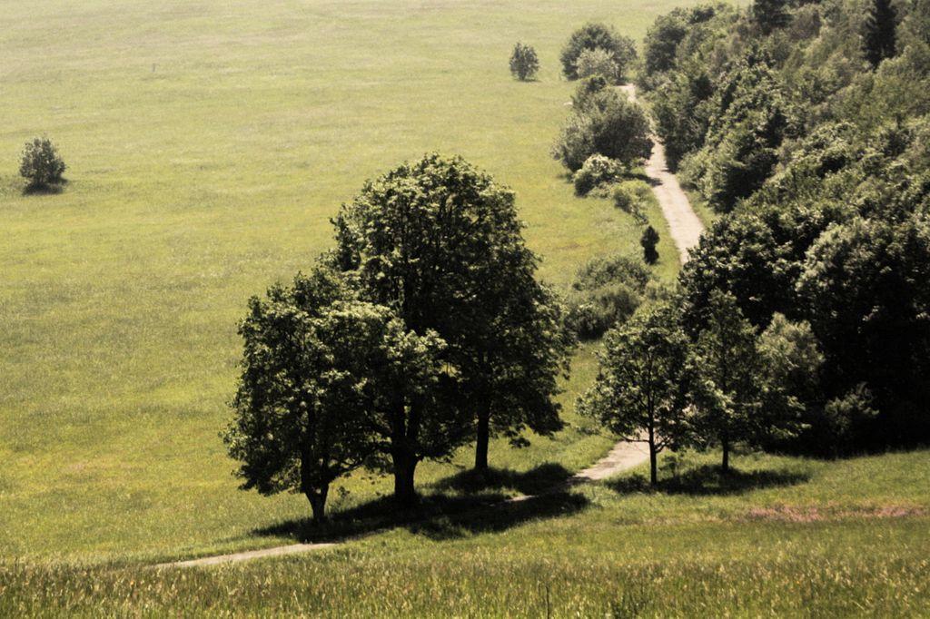 Magurski Park Narodowy. (fot. Jakub Syrek/wikipedia.org)