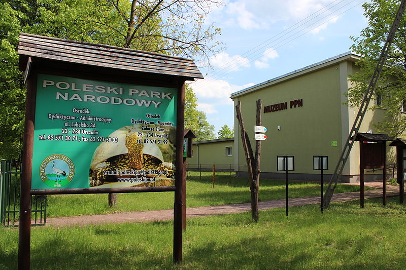 Poleski Park Narodowy. (fot. Azymut - Rafał M. Socha, wikipedia.org)
