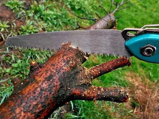 Nowe przepisy wycinki drzew: Usunięcie drzewa objętego dodatkową ochroną wciąż wymaga zezwolenia