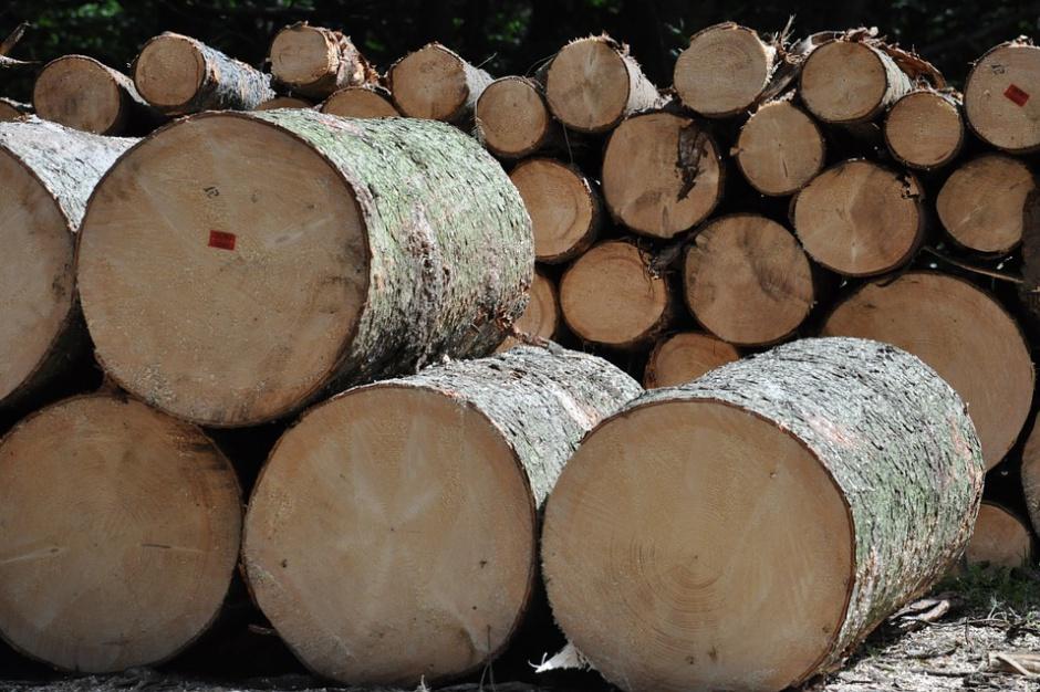 Warszawa: Partia Razem sprzeciwia się wycince drzew przed ratuszem