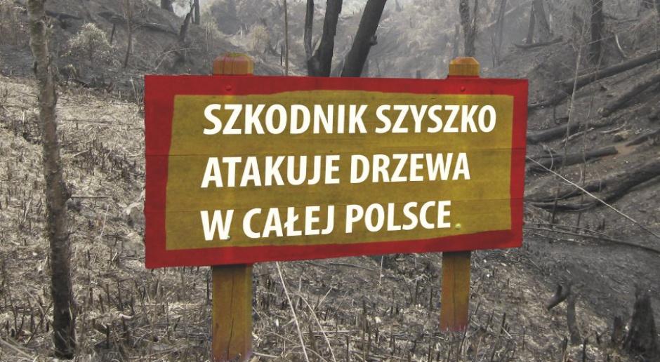 Materiał atakujący w sieci ministra Jana Szyszko za zmiany w prawie dotyczące wycinki drzew. (źródło: twitter.com/Platforma_org)