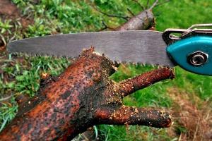 PiS przyznaje: Ustawa o ochronie przyrody zawiera luki
