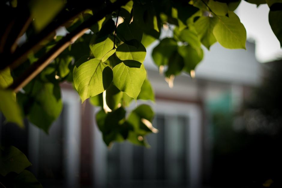 Wycinka drzew: Przepisy zostaną poprawione