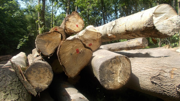 Masowa wycinka drzew w Opolu. Miasto tworzy nowy park i sadzi 800 drzew