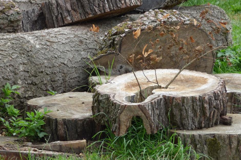 Jednak będzie poprawka ustawy o wycince drzew