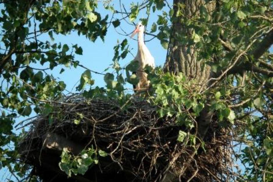 Ptaki powstrzymają wycinkę drzew