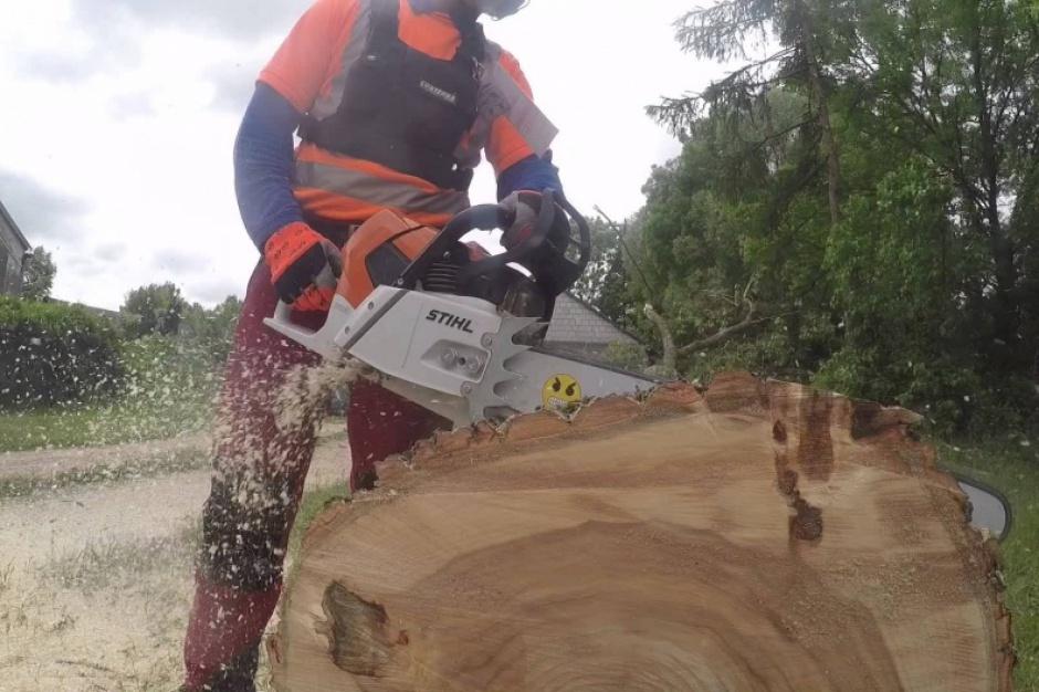 Wycinka drzew tylko po rejestracji