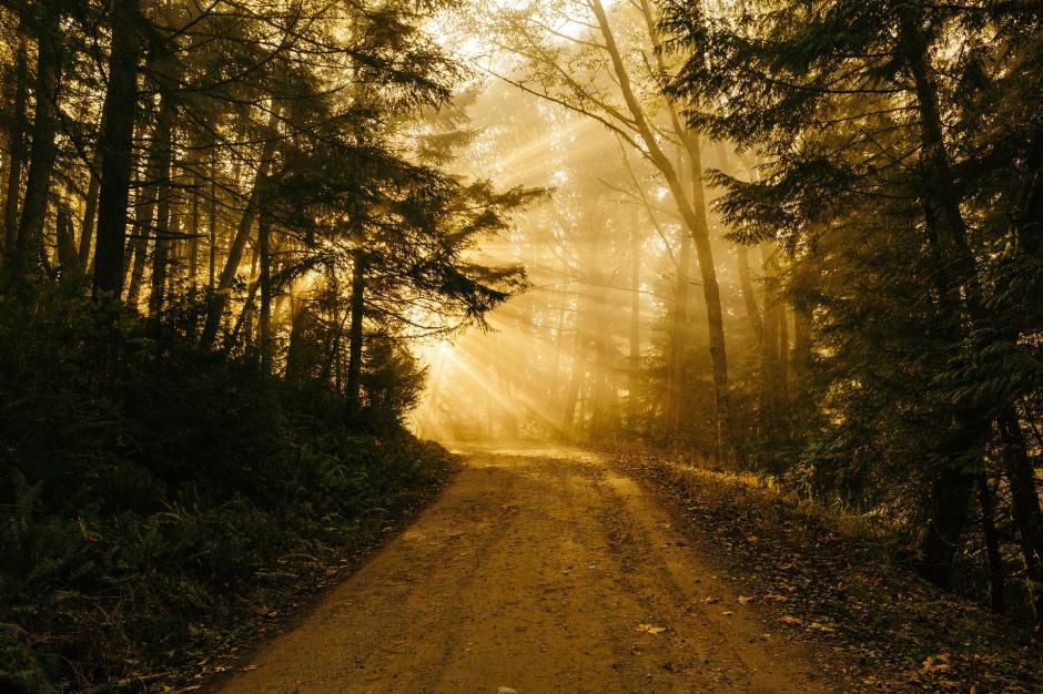 NIK: Warmińsko-mazurskie drogi leśne skontrolowane. Są zastrzeżenia do przetargów i prawa