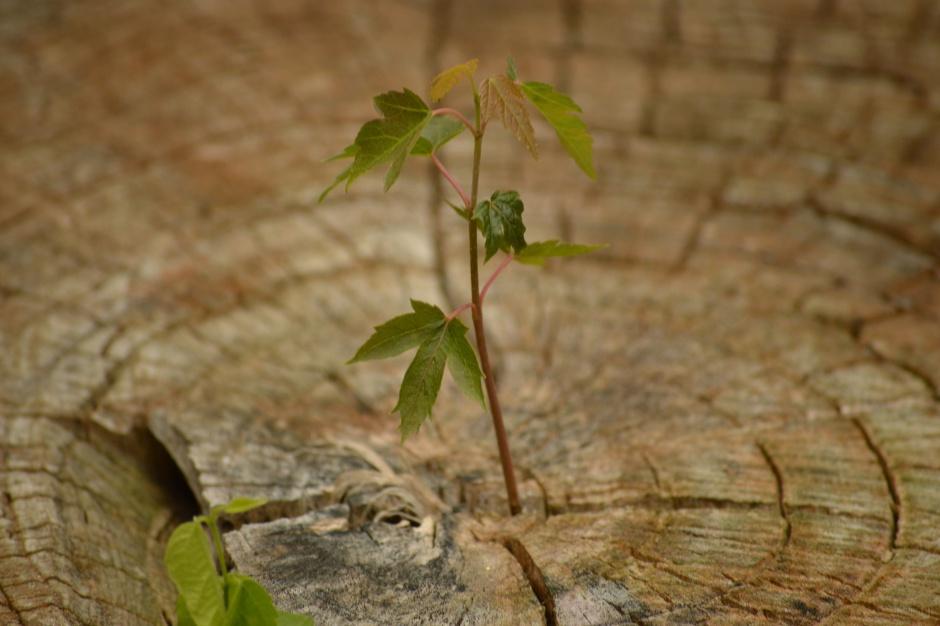 Podkarpackie: Posadzą ponad 13 mln sadzonek drzew w lasach