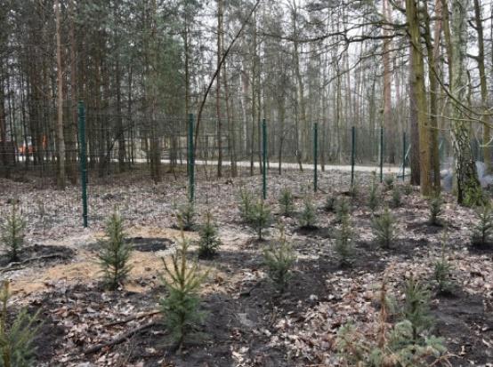 W Warszawie wiosenne sadzenie drzew