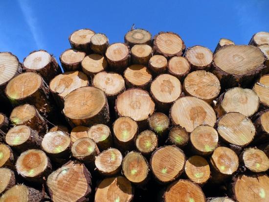 Dlaczego miasta wycinają więcej drzew niż w ubiegłym roku?