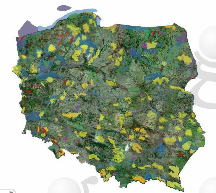 Mapę z oznaczeniem pomników przyrody i obszarów chronionych znajdziemy pod adresem http://geoserwis.gdos.gov.pl/mapy. (fot. Generalna Dyrekcja Ochrony Środowiska)