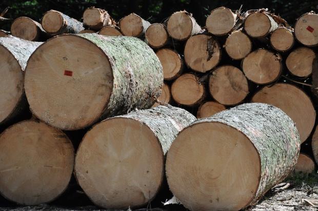 Stanisław Karczewski: Będą kary za niezgodnie z przepisami wycinanie drzew
