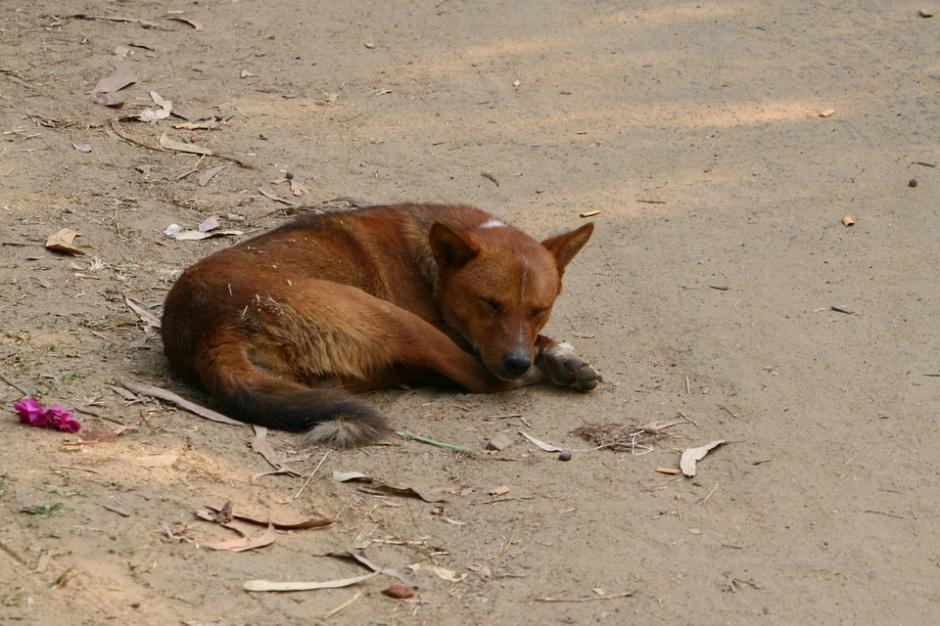 Warszawa idzie na pomoc bezdomnym zwierzętom