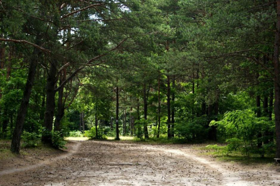 GUS: W Polsce przybywa lasów