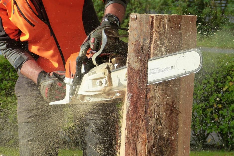 Wycinanie drzew na terenach zabytkowych znów będzie karanie
