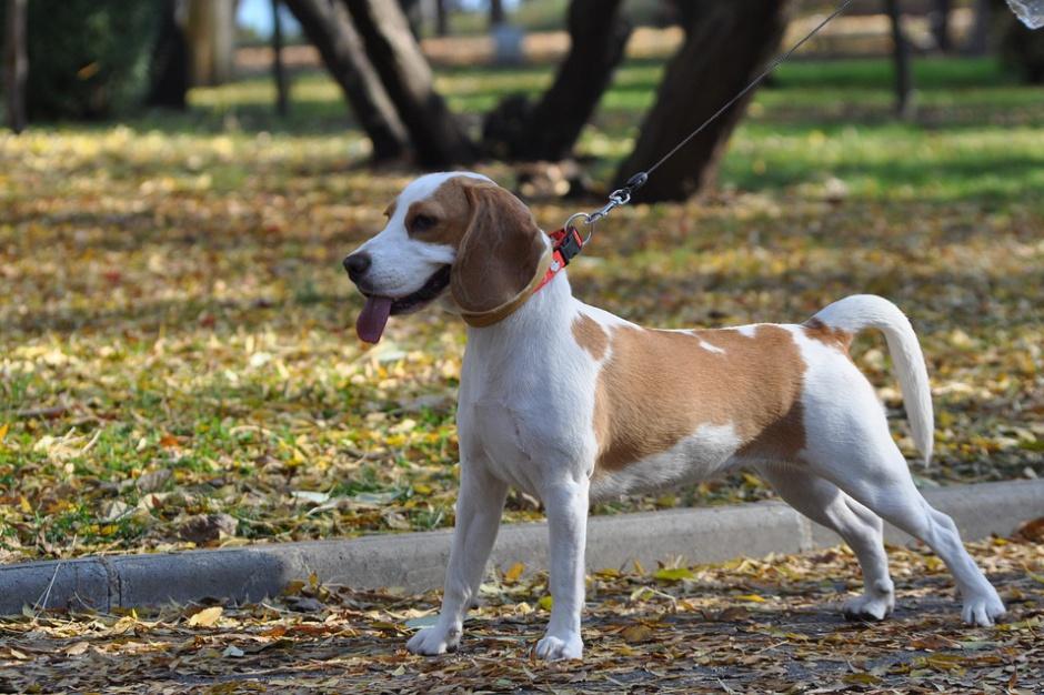 Zakaz wyprowadzania psów w parku? Taką uchwałę można zaskarżyć