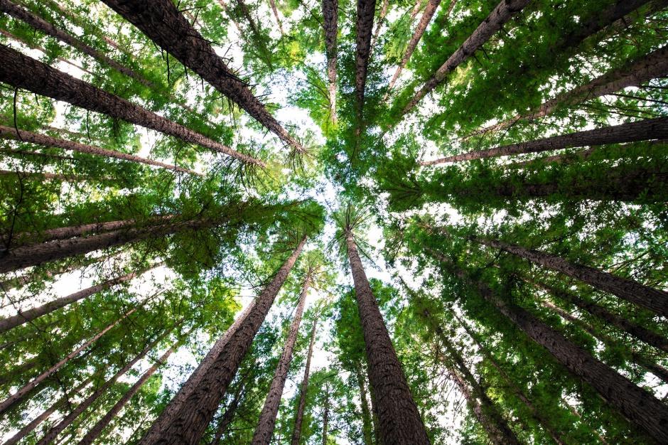 Lasy Państwe, zalesianie: Posadzą pół miliarda nowych drzew