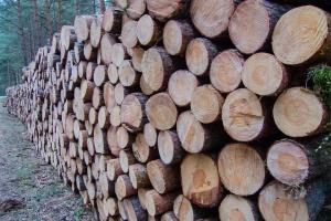 Wszczęto śledztwo w sprawie wycinki drzew w Krakowie
