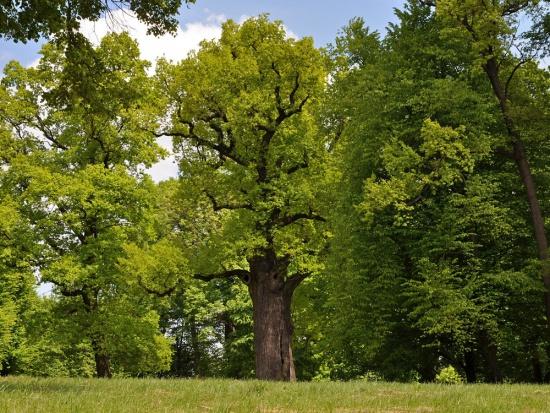 Sejmowa komisja za zmianami PiS w ustawie o wycince drzew