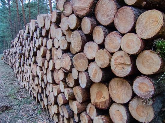 Wycinka drzew na prywatnej działce będzie możliwa, jeżeli nie będzie to związane z działalnością gospodarczą