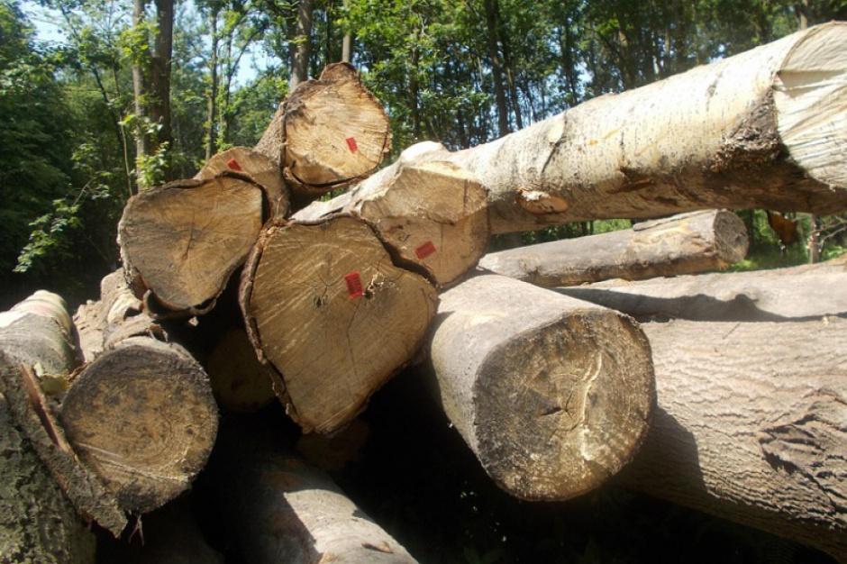 Sejm za zmianami w prawie dotyczącymi wycinki drzew