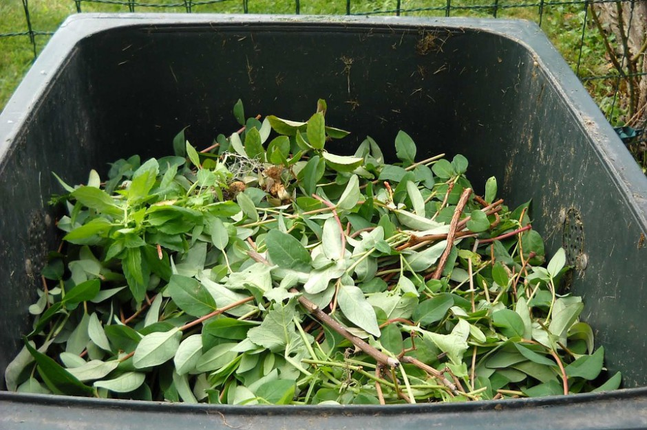 Nowe zasady segregacji odpadów: Brązowy pojemnik i odpady biodegradowalne budzą wątpliwości
