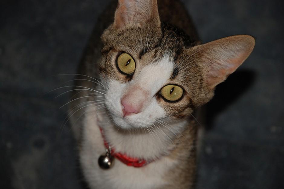 Białystok zaopiekuje się setkami bezdomnych kotów